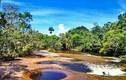 Video: Bể bơi tự nhiên hút khách giữa rừng Amazon