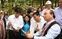 Thủ tướng thăm mô hình sản xuất sâm Ngọc Linh quy mô lớn tại Kon Tum