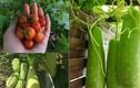 Bà mẹ Việt ở Đức tự cuốc đất, đào gạch để trồng rau sạch