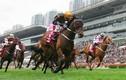 Cận cảnh nơi dự kiến làm trường đua ngựa hơn 400 triệu USD ở Hà Nội