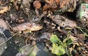 Tình trạng cá chết hàng loạt ở kênh Khe Cạn, Phú Lộc