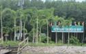 Vì sao nguyên Giám đốc Vườn Quốc gia Mũi Cà Mau bị kỷ luật?