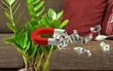 Cây phong thuỷ hợp mệnh 12 con giáp: Chọn đúng để hút tài lộc