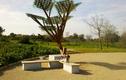 Lợi thế của cây năng lượng mặt trời
