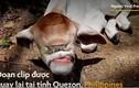 Video: Bò một mắt và không có mũi chào đời ở Philippines