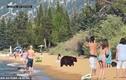 """Video: Gia đình gấu đen ra bờ hồ tắm nắng, """"không coi ai ra gì"""""""