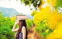 Phượt Đà Lạt đón mùa dã quỳ nở hoa vàng rực