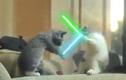 """Chết cười xem mèo """"đại chiến"""""""
