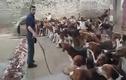 Clip rùng rợn cảnh cho đàn chó đói ăn