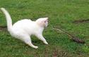 Cuộc đối đầu nảy lửa giữa mèo và rắn