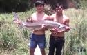 Bắt được cá tầm khủng hiếm có tại Việt Nam