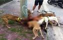 Hàng loạt vụ bị chó Pit bull tấn công dã man trên phố HN