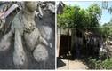 Cây sắn khổng lồ hình thù kỳ lạ ở Hà Tĩnh