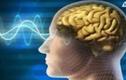 Cách khôi phục trí nhớ cho người hay quên