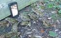 Độc chiêu bắt ếch bằng điện thoại quá dễ dàng