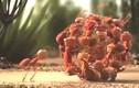 Video: Sức mạnh thần kỳ của sự đoàn kết trong loài vật