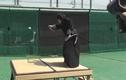 Võ sĩ Samurai chém đôi quả bóng ở vận tốc 160km/h