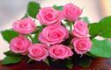 14 loài hoa tốt cho sức khỏe nên trồng trong vườn