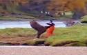 Chú gấu so tài Kung Fu cùng người