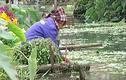 Kinh hoàng người Hà Nội ăn rau rửa bằng nước thải