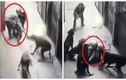 Bất ngờ nổi thú tính, đàn chó dữ xâu xé chủ gần chết ở Hà Nội