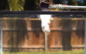 Đổ muối nóng chảy vào bể nước và cái kết không tưởng