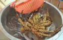 Kinh hãi tôm hùm bị chặt đầu vẫn ngọ nguậy trên đĩa