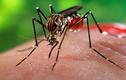 Những điều cần biết về virus Zika cực nguy hiểm