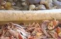 Vũng Tàu: 1/3 số mẫu hải sản dương tính với formol, hàn the