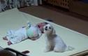 Phản ứng đáng yêu của chó cưng khi thấy bé khóc