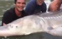 """Ngư dân vật lộn bắt """"thủy quái"""" mõm lợn nặng khủng 300kg"""