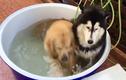 Phì cười phản ứng trái ngược của 2 chú chó khi tắm bồn