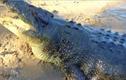 6 cá sấu khổng lồ khét tiếng nhất thế giới