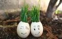 Video: 5 công dụng tuyệt vời của vỏ trứng