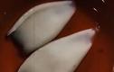 Video: Tìm hiểu về mực tẩy trắng