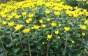 Video: 10 loại hoa mang lại giàu sang, gia chủ nên chưng trong nhà