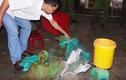 Video: Phát hiện kho tê tê, rắn hổ mang chúa nuôi tại nhà dân