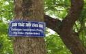 """Video: Vì sao gỗ sưa """"đắt tiền bạc tỷ""""?"""