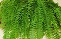Video: 7 loại cây hút bức xạ, sóng điện thoại nên trồng trong nhà