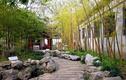 Video: Top những loại cây may mắn nên trồng trong nhà