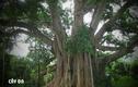 Video: Những loại cây nhất quyết không được trồng trong vườn nhà