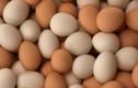 Video: 10 lợi ích tuyệt vời khi ăn trứng gà vào bữa sáng