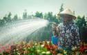 Làng hoa Sài Gòn tất bật những ngày giáp Tết Canh Tý 2020