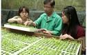 GS.TS Dương Tấn Nhựt người nhân giống thành công nhiều giống hoa Đà Lạt