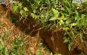 Clip: Núi Ba Vì nứt toác, nguy cơ sạt lở
