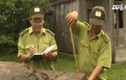 Kiểm lâm bảo kê cho lâm tặc tại Quảng Nam