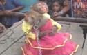 Clip: Lễ cưới hoành tráng của cặp đôi... khỉ