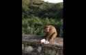 Clip: Chú khỉ mất vía vì trò đùa quái ác
