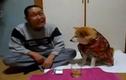 Bằng chứng về sự thông minh của loài chó