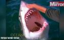 Thót tim cảnh vuốt ve miệng cá mập giữa biển
